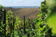 Campos e vinhedo em República Checa Localizado em Moravia sul fotografia de stock royalty free