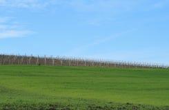 Campos e vinhedos do céu Fotografia de Stock