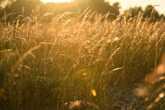 Campos en la puesta del sol Foto de archivo