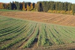 Campos en paisaje montañoso del otoño Imágenes de archivo libres de regalías