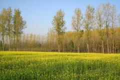 Campos escénicos de la mostaza en Uttaranchal la India Imágenes de archivo libres de regalías