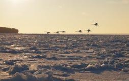 Campos extensos del hielo marino Imagen de archivo