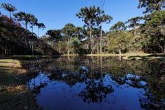 Campos faz o lago Jordao Imagem de Stock
