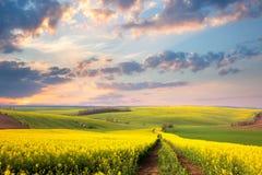 Campos florecientes amarillos, camino de tierra y valle hermoso Fotos de archivo