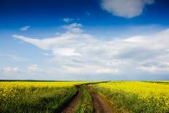 Campos florecientes amarillos, camino de tierra y valle hermoso, primavera de la naturaleza Foto de archivo