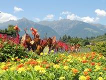 Campos florecientes coloreados en paisaje de la montaña Foto de archivo