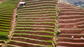 Campos hermosos del arroz con la choza y los granjeros almacen de metraje de vídeo