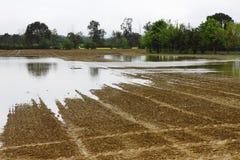 Campos inundados Imagen de archivo libre de regalías