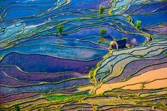 Campos inundados do arroz no Sul da China fotos de stock