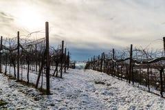 Campos italianos com neve Fotos de Stock