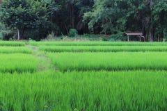 Campos junto à floresta Imagem de Stock