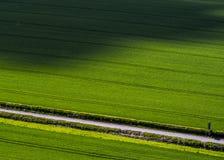 Campos magníficos da colheita no por do sol fotos de stock