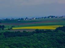 Campos, nabo y x28 florecientes amarillos de la violación; Napus& x29 de la brassica; , campo floreciente de la violación en la p Foto de archivo libre de regalías