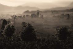 Campos nebulosos Fotos de archivo libres de regalías