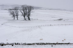 Campos nevado Imagens de Stock Royalty Free