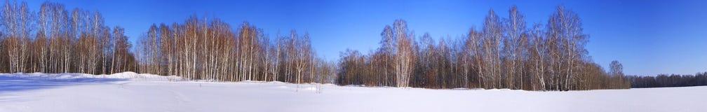 Campos Nevado y bosque del abedul en invierno Fotografía de archivo libre de regalías