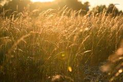 Campos no por do sol foto de stock