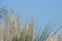 Campos no vento Fotografia de Stock