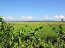 Campos nos degradado, Tailandia norteña Imagenes de archivo
