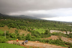 Campos pintorescos del arroz del kangra la India Fotografía de archivo libre de regalías