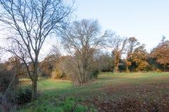 Campos plantados paisaje del invierno de Medterranean Fotos de archivo