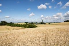 Campos, prados, nuvens fotografia de stock