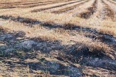 Campos quemados imagen de archivo