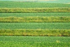 Campos Terraced Imagens de Stock