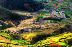 Campos Terraced do arroz Imagens de Stock Royalty Free