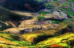 Campos Terraced do arroz Imagens de Stock Royalty Free