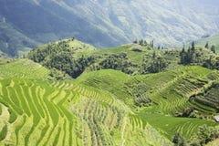Campos Terraced do arroz de Longji imagem de stock royalty free