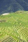 Campos Terraced do arroz de Longji Fotos de Stock Royalty Free