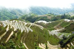 Campos Terraced do arroz em Guilin, Longshan Fotografia de Stock Royalty Free