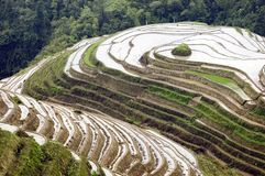Campos Terraced do arroz em Guilin, Longshan Foto de Stock