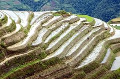 Campos Terraced do arroz em Guilin, Longshan Fotografia de Stock