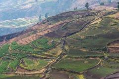 Campos Terraced no Peru imagem de stock royalty free