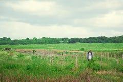 Campos tropicais agricultura Um homem em um chapéu de vime fotografia de stock royalty free