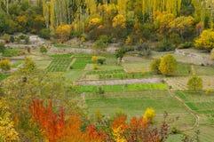 Campos vegetales en el valle de Hunza, Paquistán septentrional Imagenes de archivo