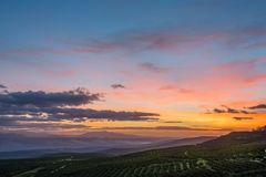 Campos verde-oliva no nascer do sol fotos de stock royalty free