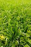 Campos verdes Imagen de archivo