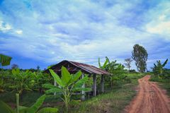 campos verdes fotografia de stock