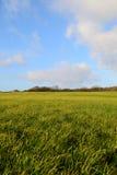 Campos verdes. Foto de Stock