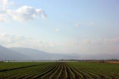 Campos verdes Fotos de Stock