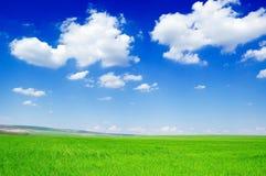 Campos verdes imagem de stock