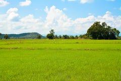 campos verdes Fotos de Stock Royalty Free