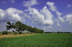 campos verdes Imagens de Stock Royalty Free