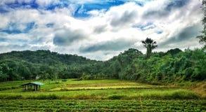 campos verdes Fotografía de archivo