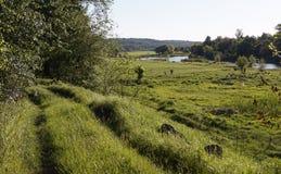 campos verdes Imagem de Stock Royalty Free