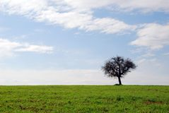 Campos verdes, céu azul, árvore só Fotografia de Stock