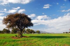 Campos verdes, céu azul, árvore só foto de stock